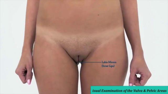 Real Female Anatomy | Visual Examination of the Vulva & Pelvic Areas – Part 1