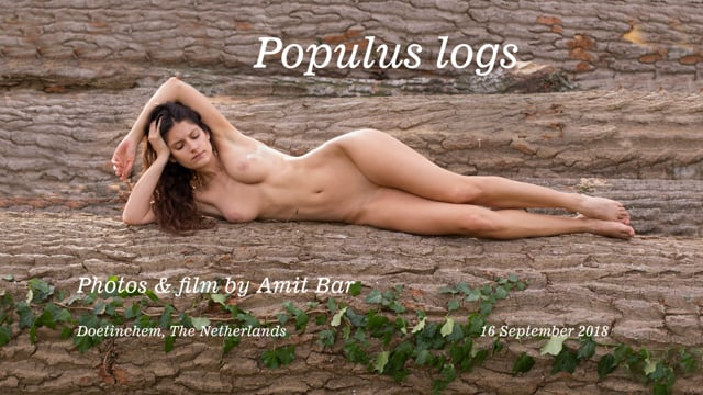 Populus logs by Amit Bar